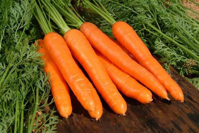 Очень полезна обыкновенная морковь
