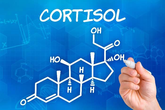 Гормон кортизол — что это такое? Почему от него растет живот?