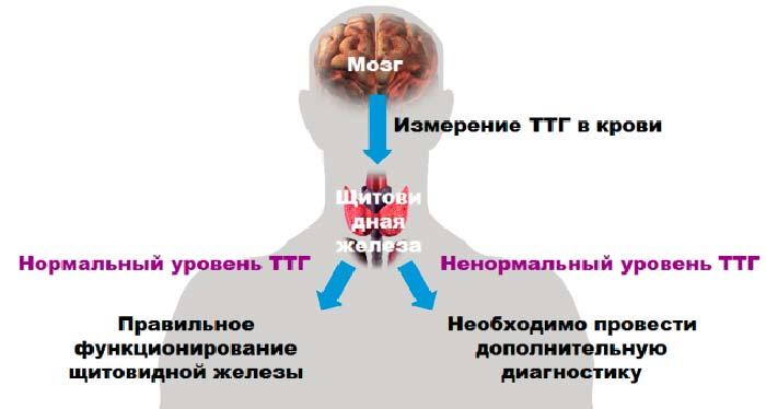 Измерение ТТГ