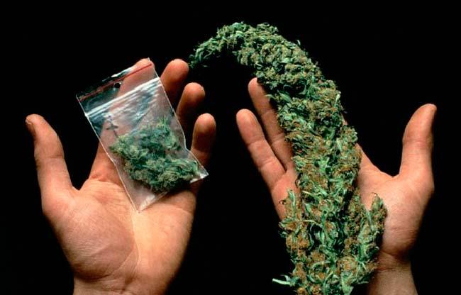 марихуана (анаша)